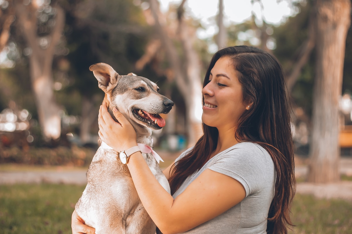 moving company best moving company in new jersey moving with pets tips in moving