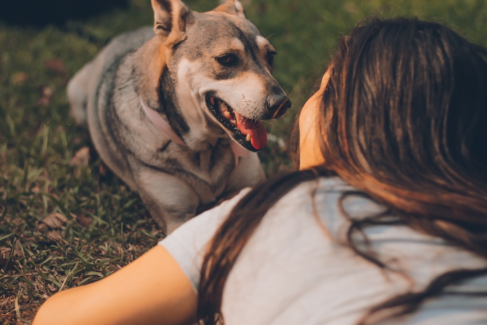 Show Your Dog You Love Them in Their Own Language
