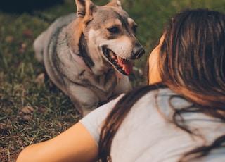 woman lying beside adult gray and tan dog