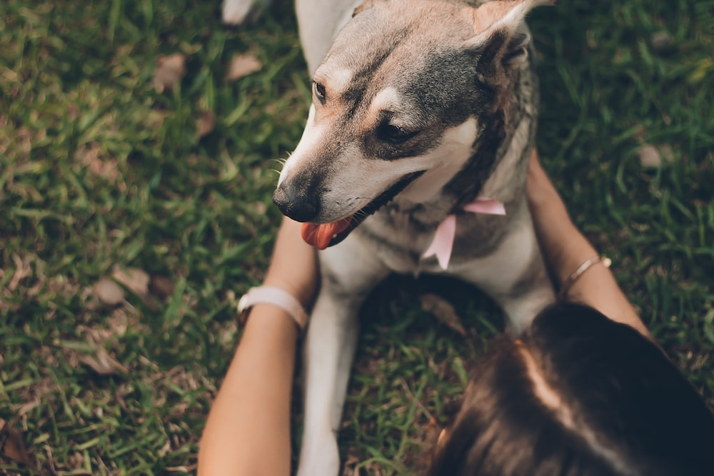 woman playing with the dog