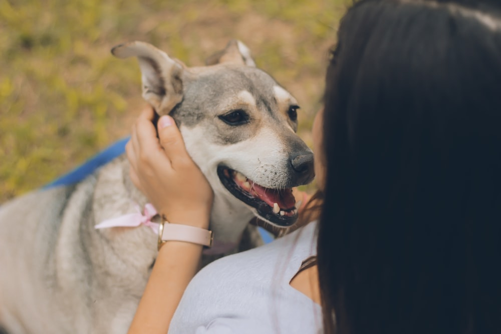 woman holding gray and white dog outdoor during daytime