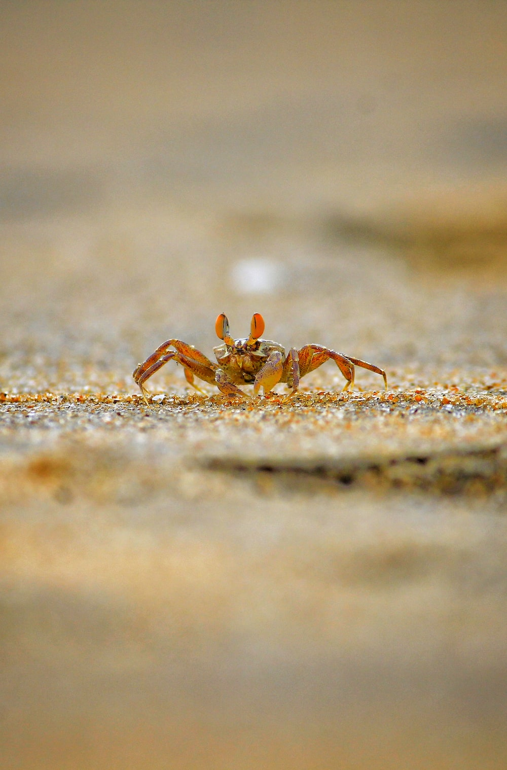 selective focus photo of spider
