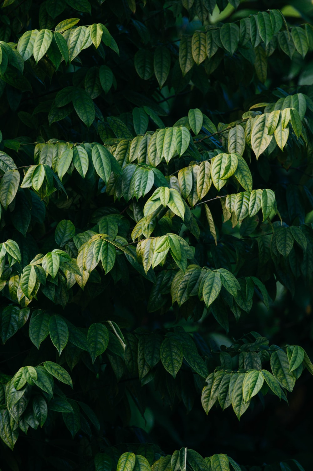 selective focus photography of green-leafed plants during daytime