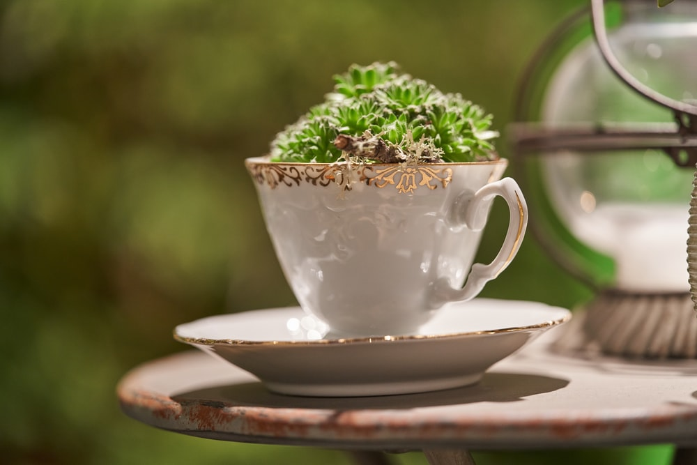 close-up photography of plant in tea cup