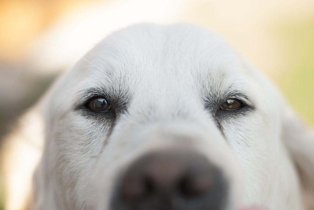 short-coated white dog selective photography