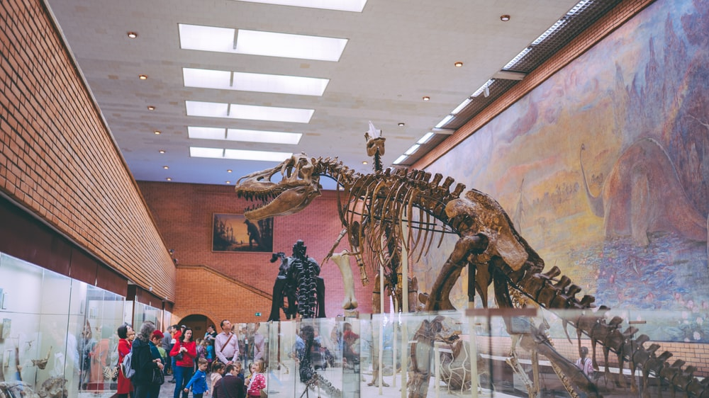 people standing near dinosaur skeleton