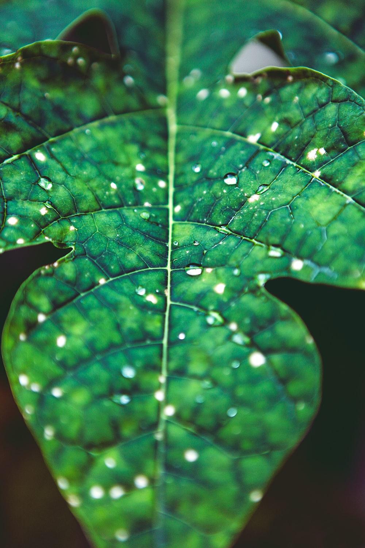 green leaf closeup photography
