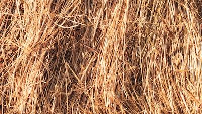 brown grass field straw teams background