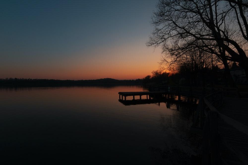 silhouette photo of lake beside tree