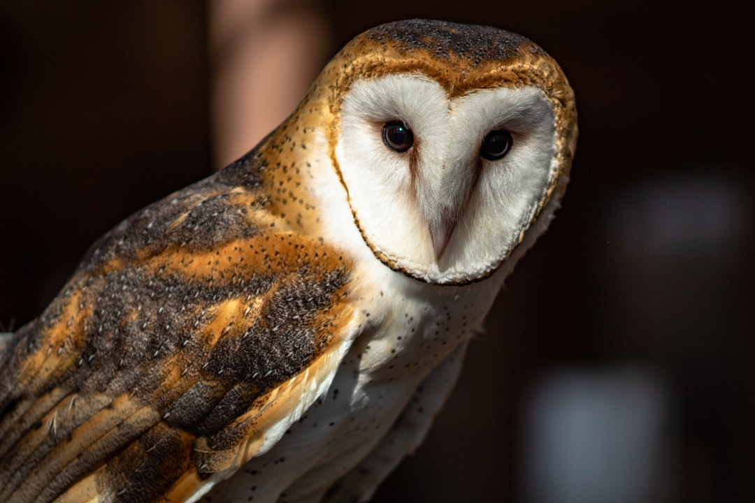 This barn owl was very jumpy…not quite used to humans yet.  It was injured by a car and is now being cared for by the rangers at Meeman-Shelby Forest State Park.