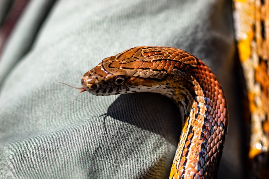 This corn snake was so friendly…it kept slithering around on all those wanting to hold it.