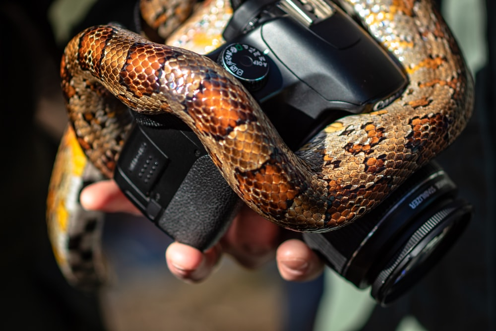 close-up of black Canon DSLR camera and snake