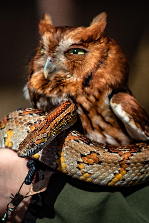 snaked beside owl