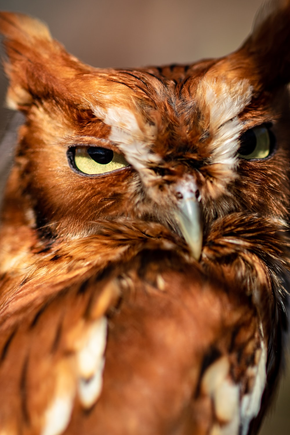 selective focus photo of brown owl