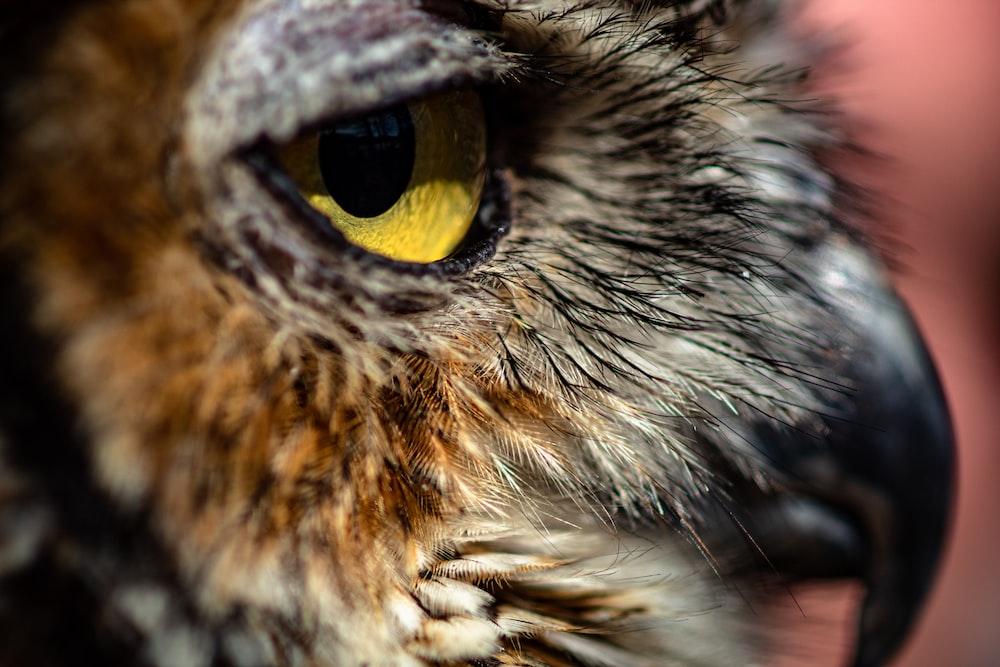 brown portrait of owl
