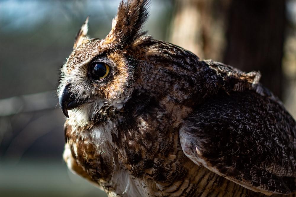 close-up of brown owl