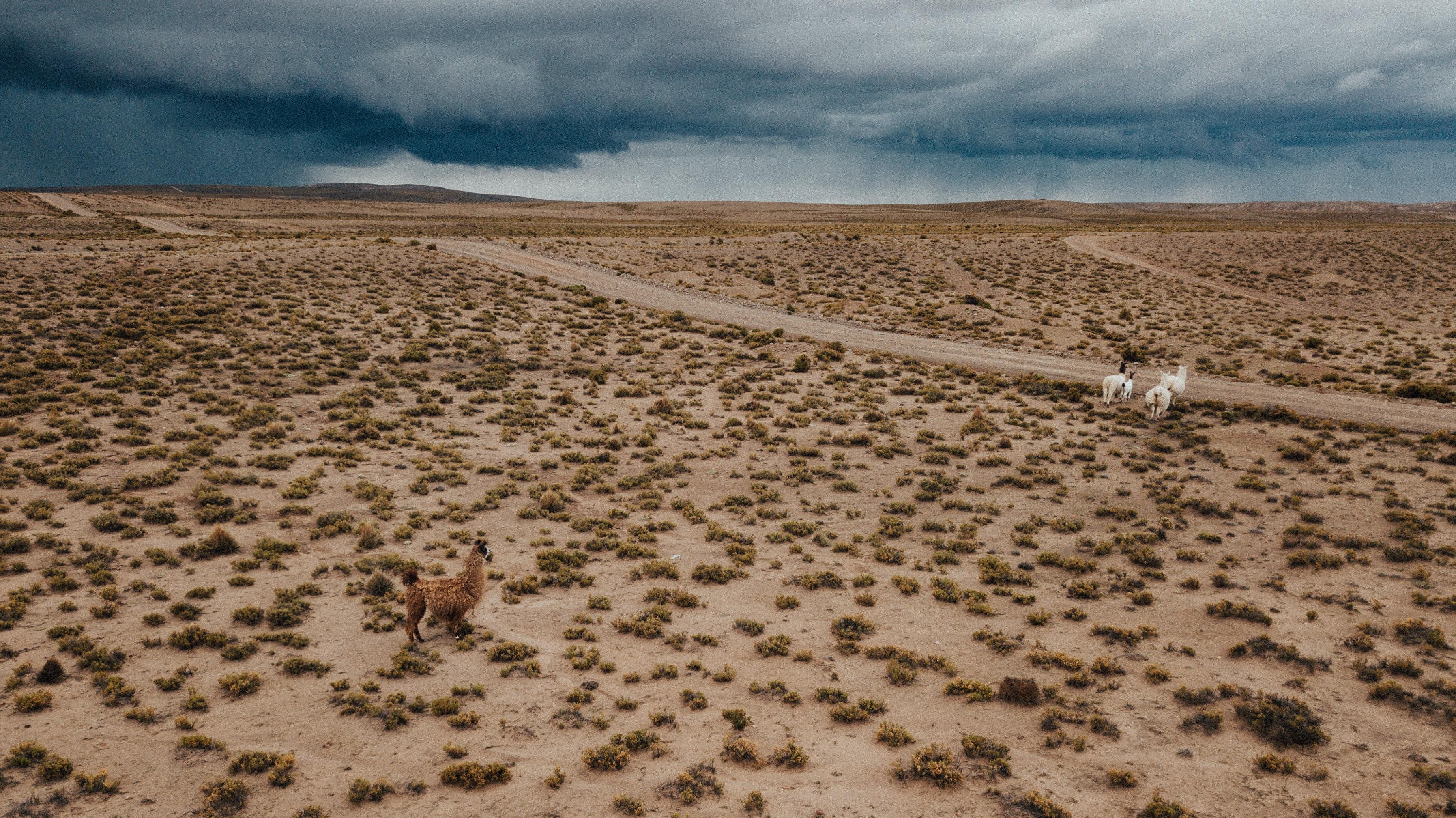 donkey on desert