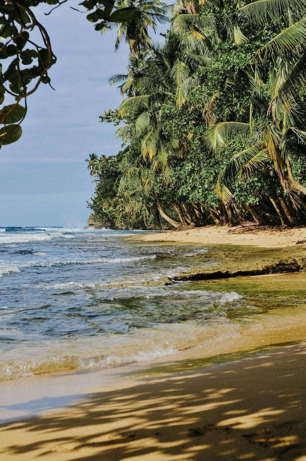 green palm trees nearby seashores