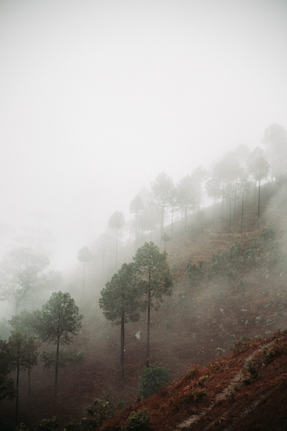 trees on hill with fog