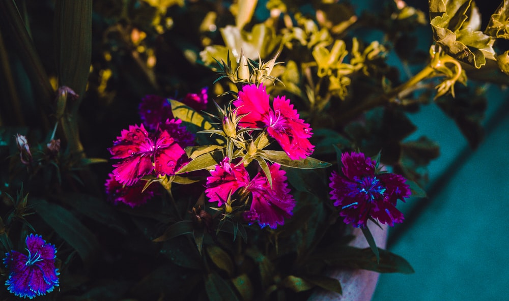 pink-petaled flowers in macro photography