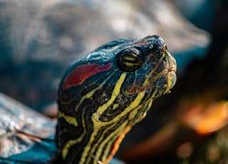 selective focus photography of brown and green turtle