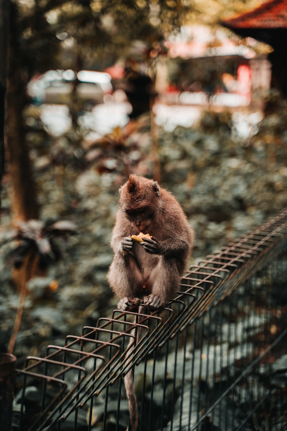 brown monkey on brown metal fence