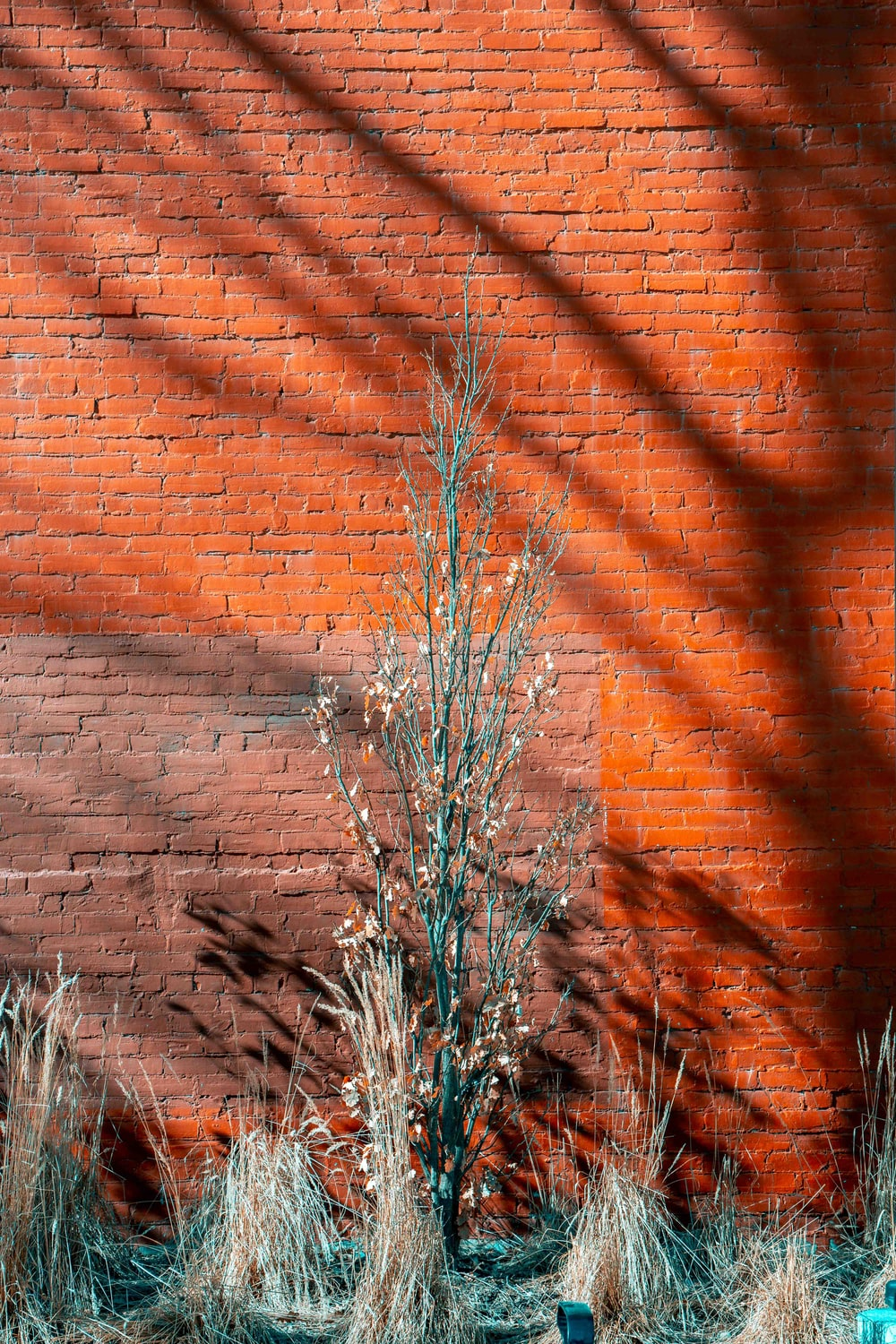 green tree plant near brown concrete wall during daytime