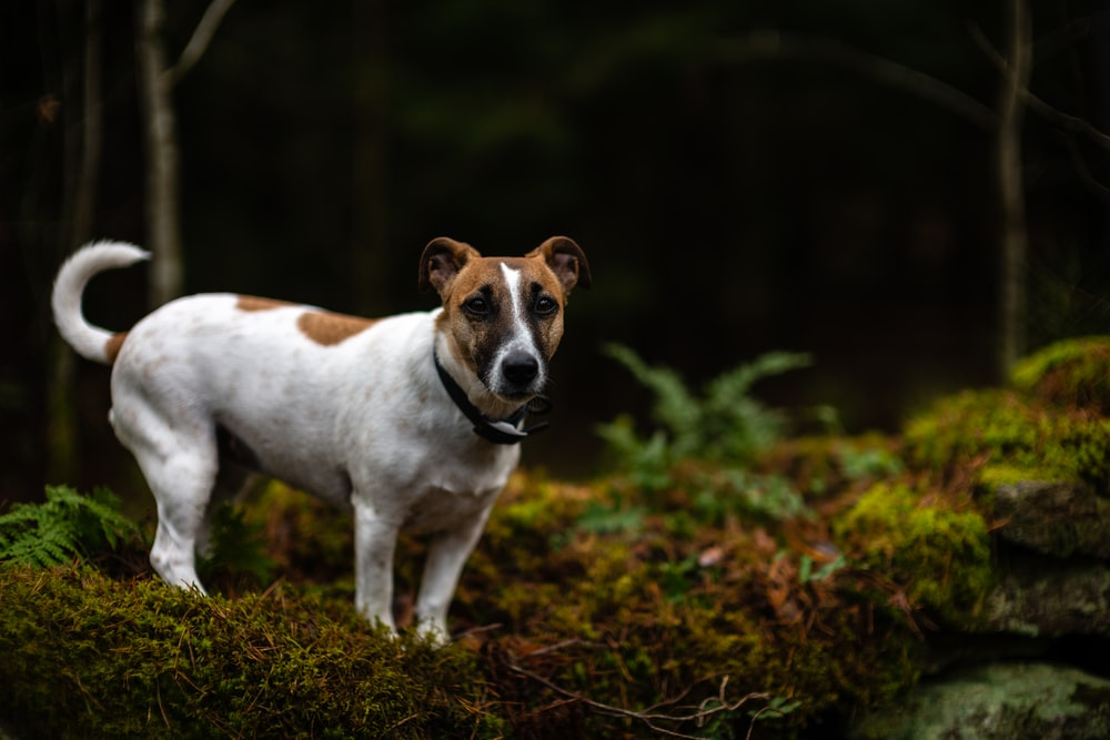 white and brown dog standing near tree