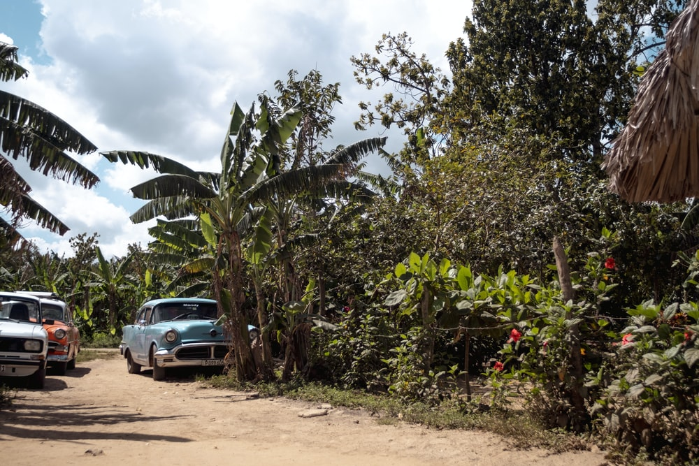 classic blue car parked beside dirt track and banana trees during daytime