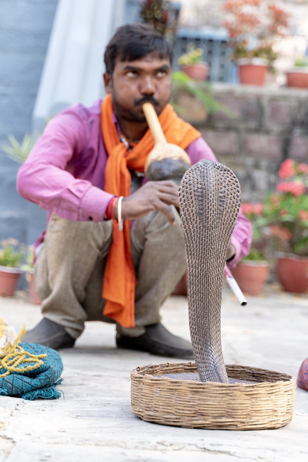 person playing instrument with cobra