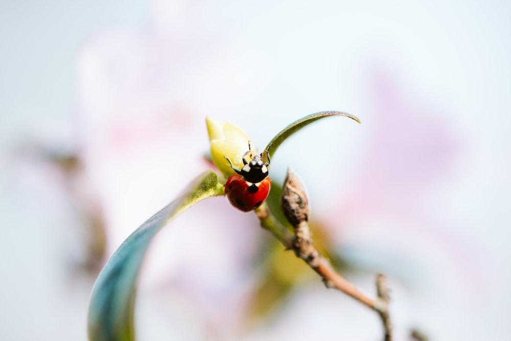 red ladybug on green plant