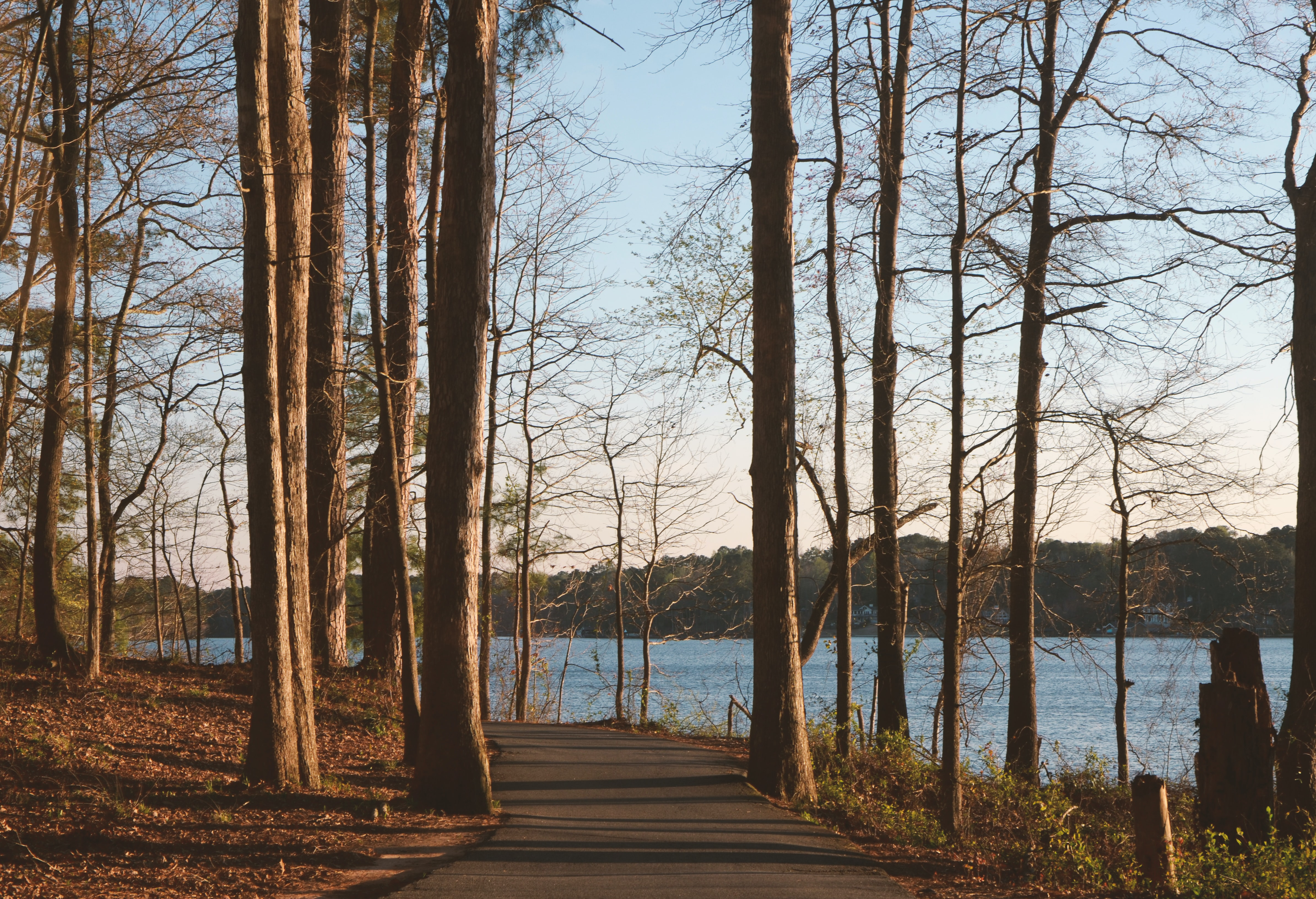 green-leafed trees near pathway during daytime