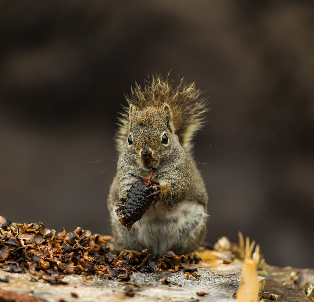 brown squirrel on brown surface