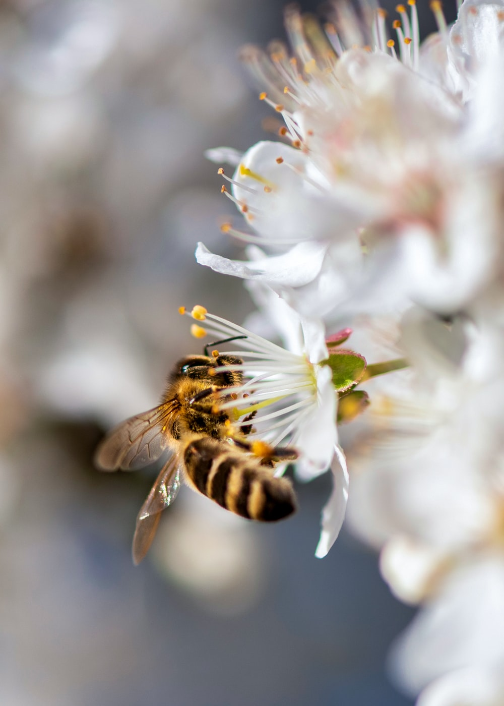 close-up photography of bumblebee