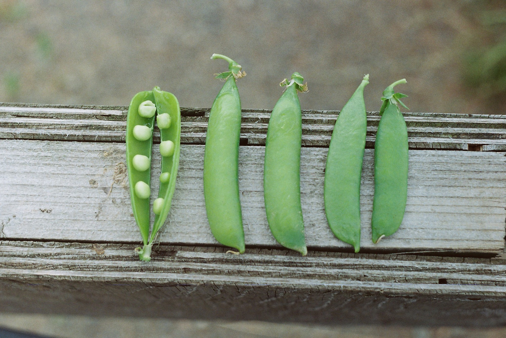 If You Plant Peas...