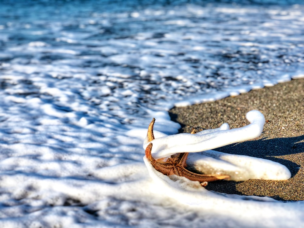 starfish on sand with seawaves during daytime