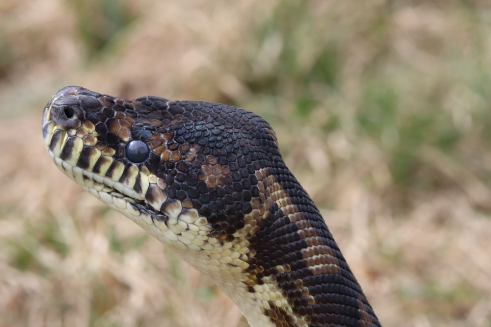 selective focus photography of snake head