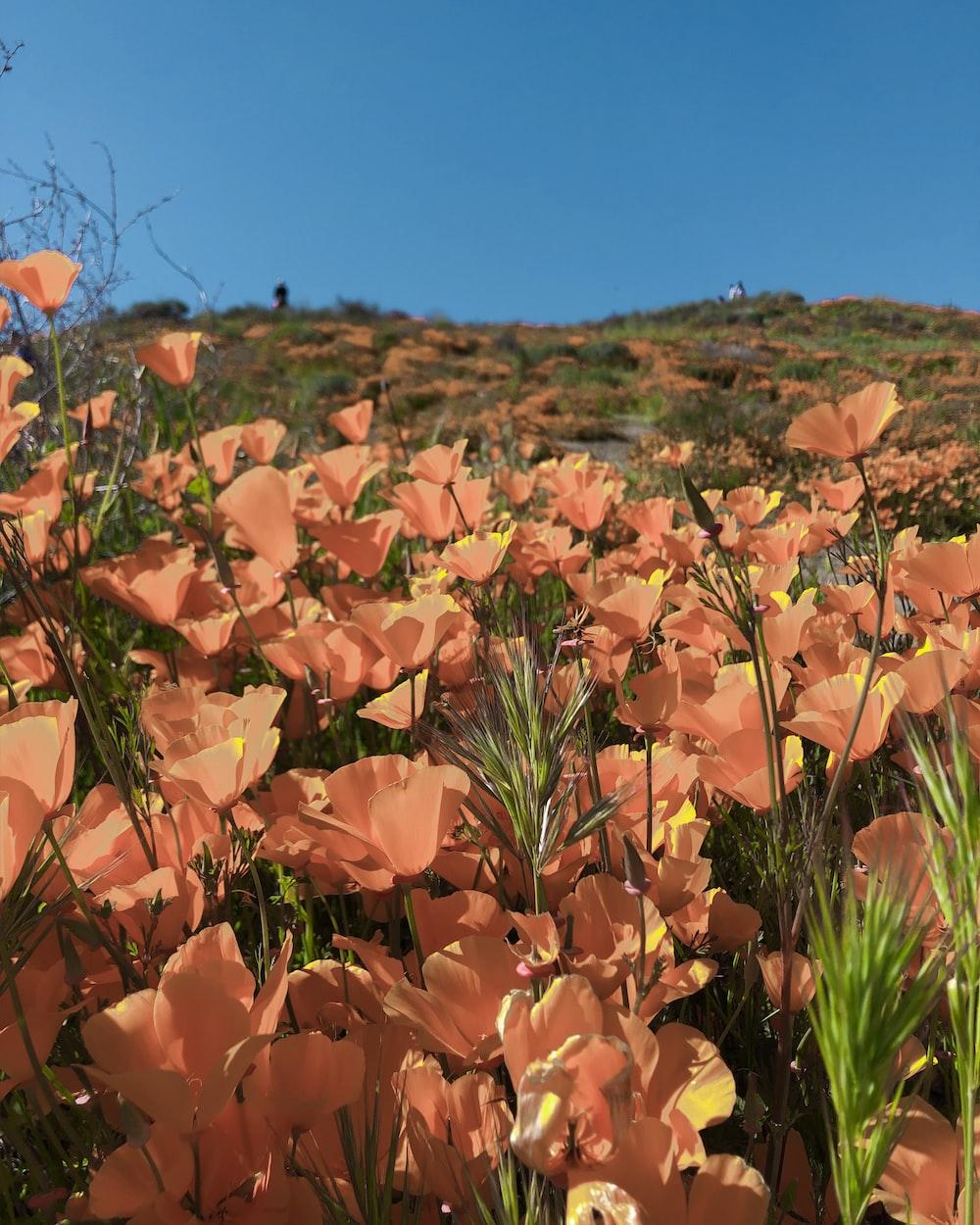 bed of orange flowers