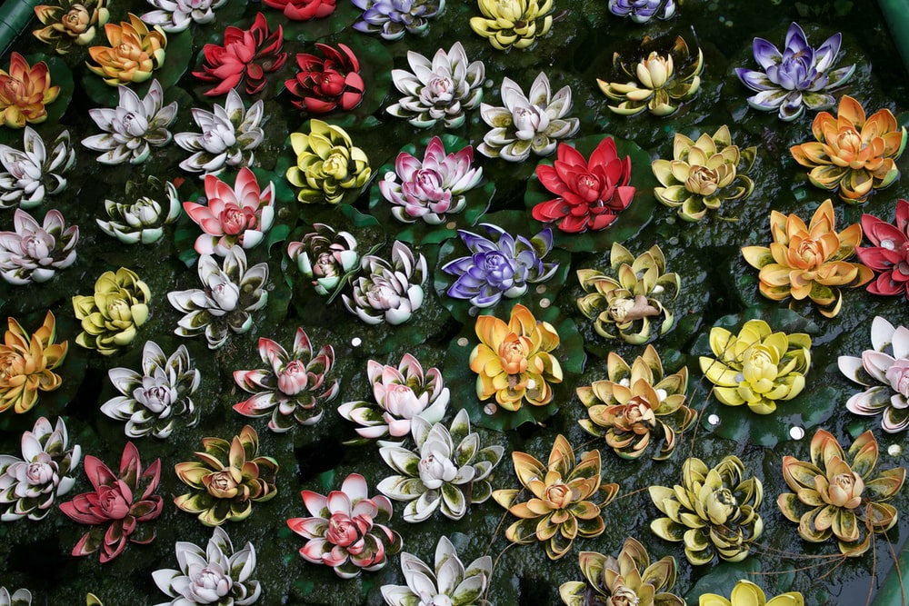 assorted-color lotus flowers