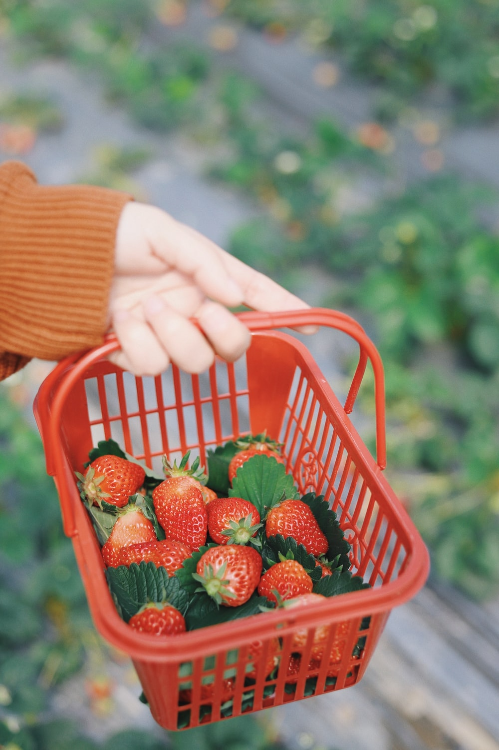 person carrying basket of strawberries