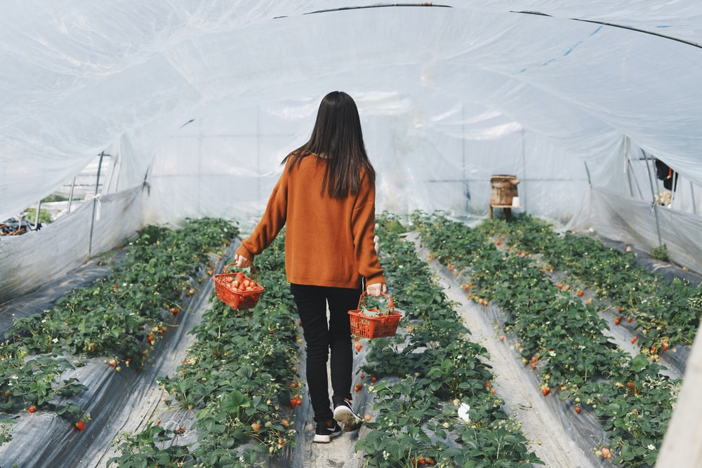 woman in brown sweater holding two baskets while walking on green house