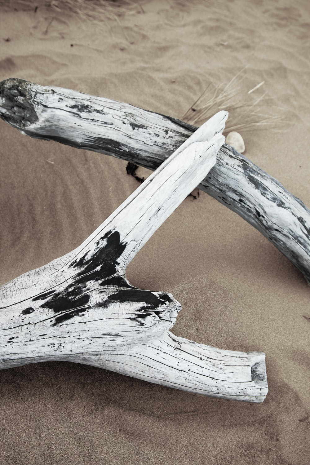 white wood logs on sand