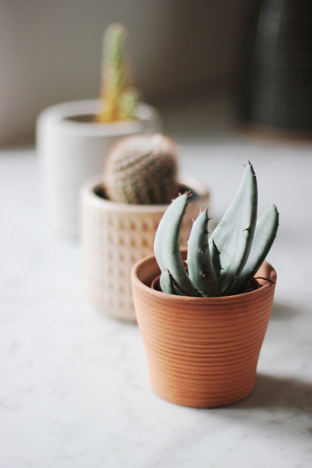 selective focus photo of succulent plant