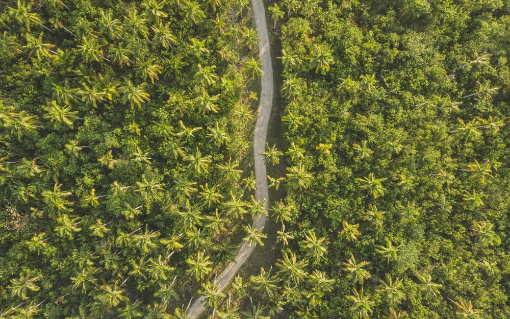 bird's-eye photography of road surrounded by trees