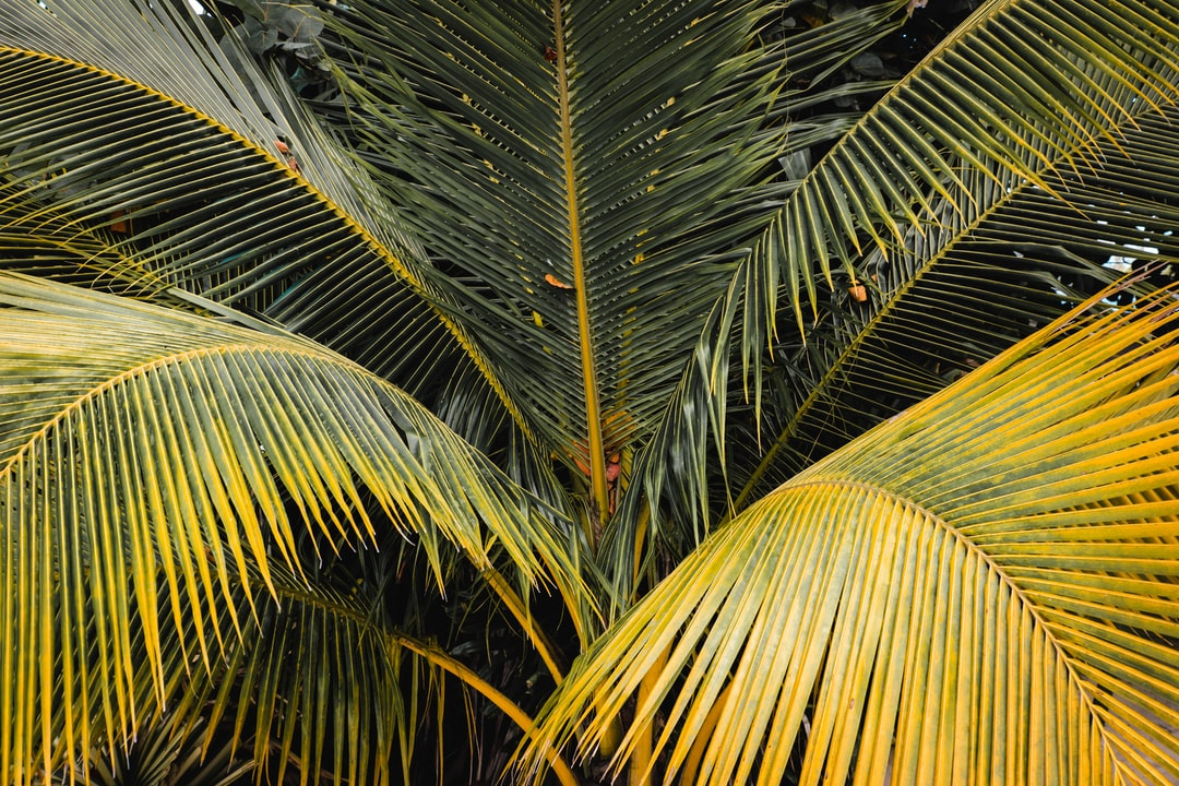 Palm trees line the coast of Jamaica, and I love the different shades and textures you can find in each one.