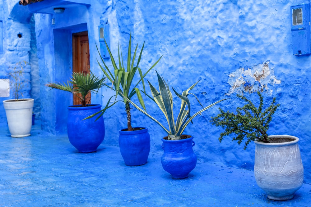 assorted potted plants in blue and gray clay pots near blue concrete wall