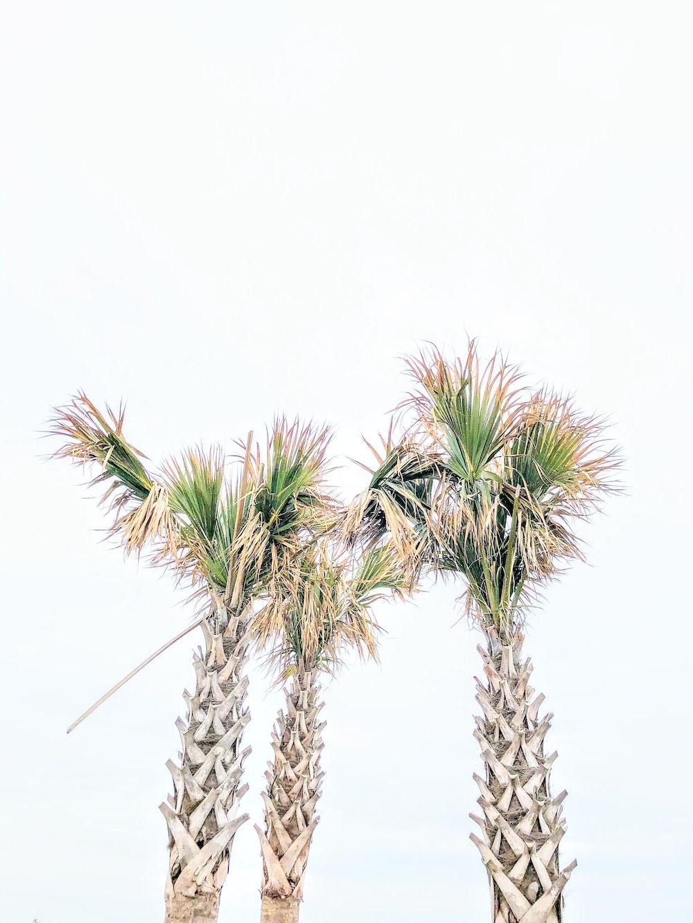 three green linear-leafed plants