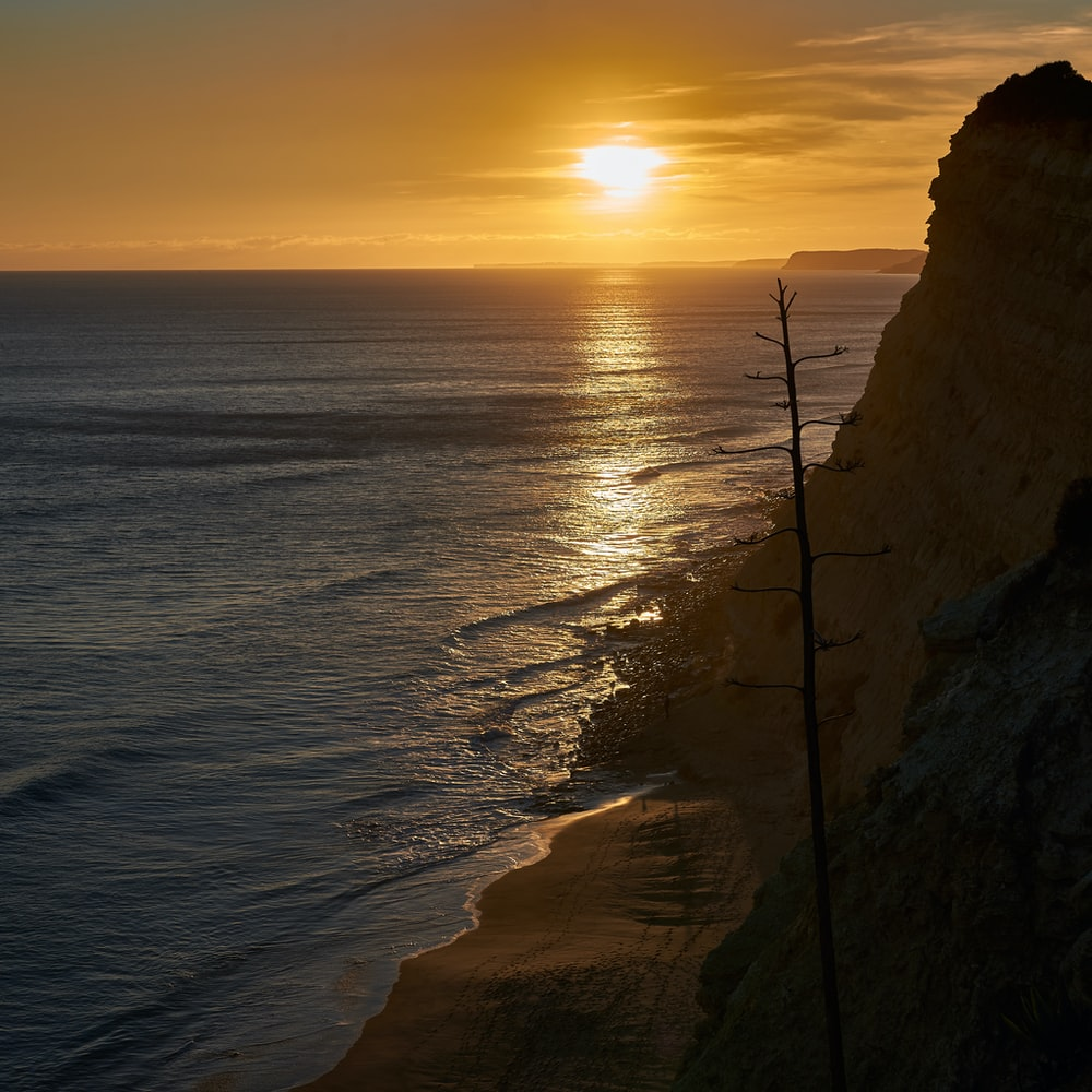 bird's-eye view photo of bare tree near shoreline during golden hour