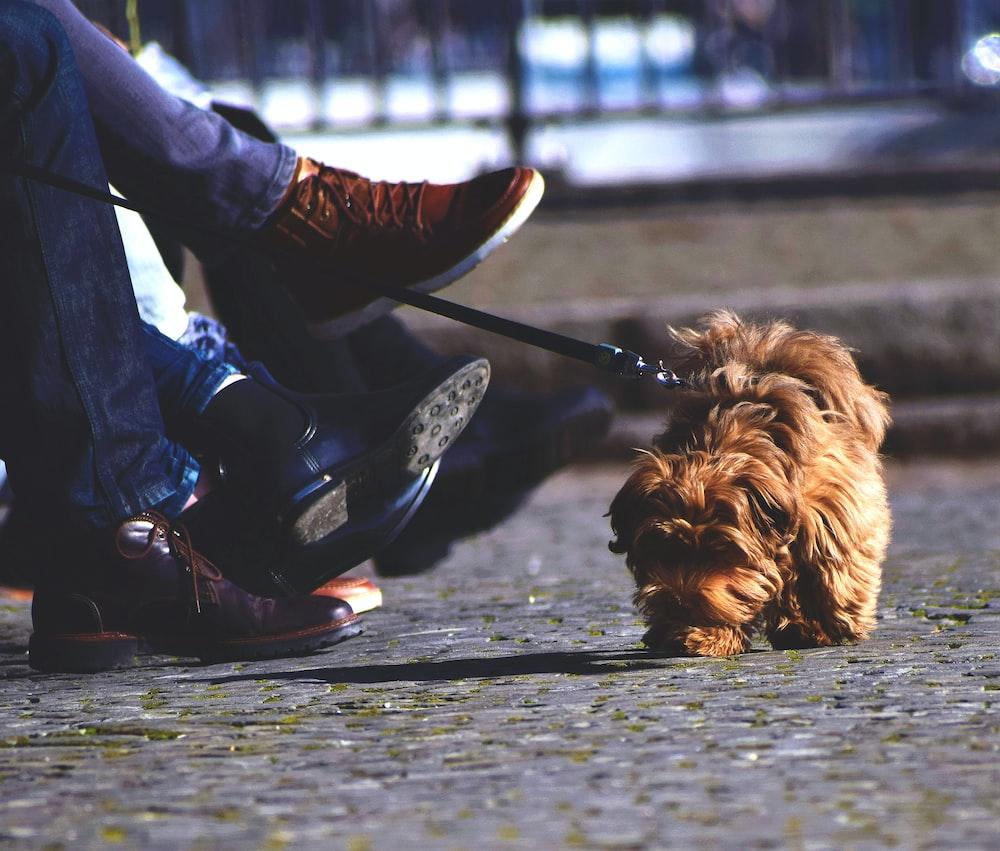Admirable Selective Focus Photography Of Medium Coated Brown Small Dog Frankydiablos Diy Chair Ideas Frankydiabloscom