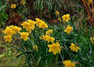 yellow flowers blooming near grass